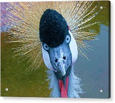 Bad Hair Day Acrylic Print by Margaret Bobb