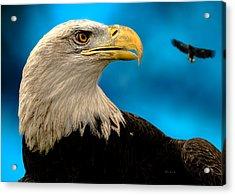 Bald Eagle And Fledgling  Acrylic Print by Bob Orsillo