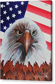 Bald Eagle Acrylic Print by Bob Williams