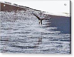 Bald Eagle Acrylic Print by Steven Ralser