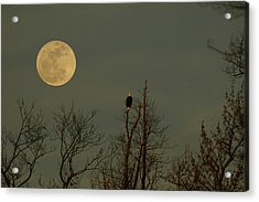 Bald Eagle Watching The Full Moon Acrylic Print by Raymond Salani III