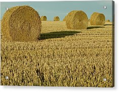 Bales Of Grain At Harvest Time Acrylic Print by Cyril Ruoso