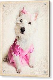 Ballerina Dog Acrylic Print by Edward Fielding