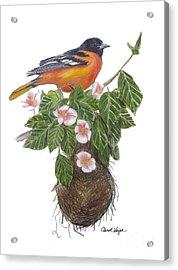 Baltimore Oriole Acrylic Print by Carol Veiga