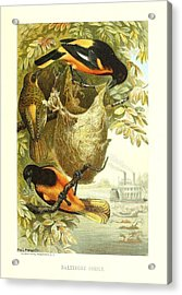 Baltimore Orioles Acrylic Print by Philip Ralley
