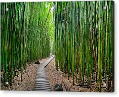 Bamboo Brilliance Acrylic Print by Sean Davey