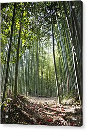 Bamboo Forest Acrylic Print by John Wong