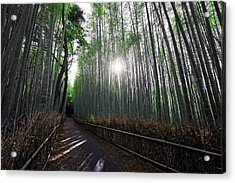 Bamboo Forest Path Of Kyoto Acrylic Print by Daniel Hagerman