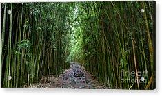 Bamboo Forest Trail Hana Maui Acrylic Print by Dustin K Ryan
