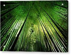 Bamboo Night Acrylic Print by Takeshi Marumoto