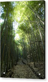 Bamboo Road Acrylic Print by Aaron S Bedell