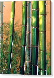 Bamboo Sticks Acrylic Print by Panoramic Images