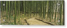 Bamboo Trees On Both Sides Of A Path Acrylic Print by Panoramic Images