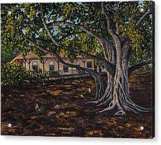 Banyan Tree Acrylic Print by Darice Machel McGuire