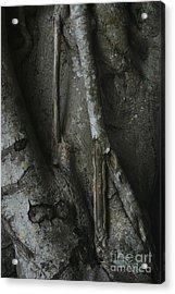 Banyan Tree Roots Acrylic Print by Cindi Ressler