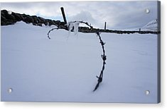 Barbed Wire Acrylic Print by Riley Handforth
