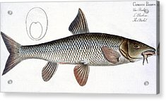 Barbel Acrylic Print by Andreas Ludwig Kruger