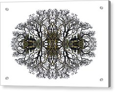 Bare Tree Acrylic Print by Debra and Dave Vanderlaan