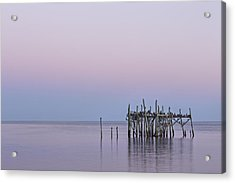 Barely Standing Acrylic Print by Jon Glaser