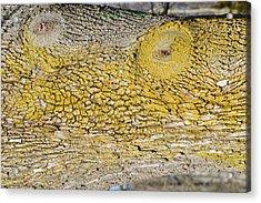 Bark Art Acrylic Print by Sonali Gangane