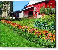 Barn And Garden Acrylic Print by Tina M Wenger