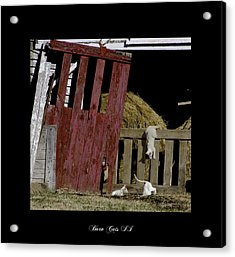 Barn Cats II Acrylic Print by Gina Munger