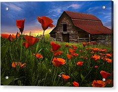 Barn In Poppies Acrylic Print by Debra and Dave Vanderlaan