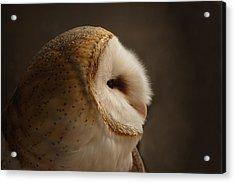 Barn Owl 3 Acrylic Print by Ernie Echols