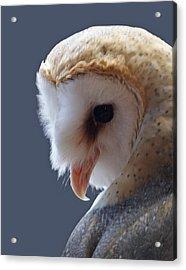 Barn Owl Dry Brushed Acrylic Print by Ernie Echols