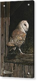Barn Owl In The Old Barn Acrylic Print by Rob Dreyer AFC