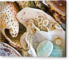 Barnacles And Shells Acrylic Print by Colleen Kammerer