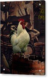 Barnyard Rooster Acrylic Print by Matthew Schwartz