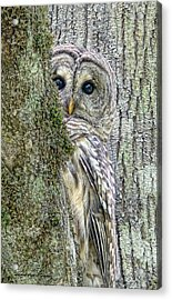 Barred Owl Peek A Boo Acrylic Print by Jennie Marie Schell