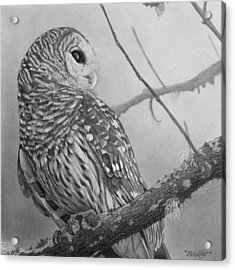 Barred Owl Acrylic Print by Tim Dangaran