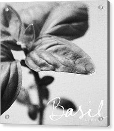 Basil Acrylic Print by Linda Woods