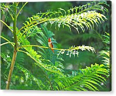 Basking In The Morning Light Acrylic Print by Lynn Bauer