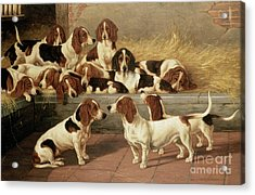 Basset Hounds In A Kennel Acrylic Print by VT Garland