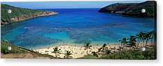 Beach At Hanauma Bay Oahu Hawaii Usa Acrylic Print by Panoramic Images