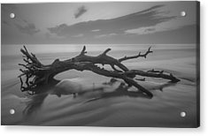Beach Bones Acrylic Print by Debra and Dave Vanderlaan