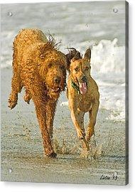 Beach Buddies Acrylic Print by Larry Linton