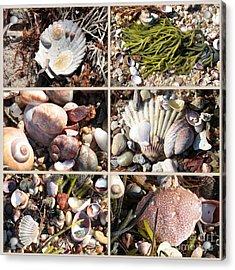 Beach Treasures Acrylic Print by Carol Groenen