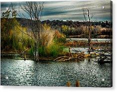Beautiful Autumn Marsh Acrylic Print by Kimberleigh Ladd