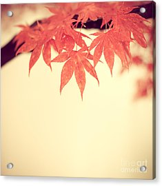 Beautiful Fall Acrylic Print by Hannes Cmarits