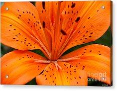 Beautiful Lily Acrylic Print by Carol Lynch