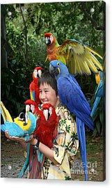 Beautiful Macaw - Garden Of Eden Puohokamoa Valley Maui Hawaii Acrylic Print by Sharon Mau
