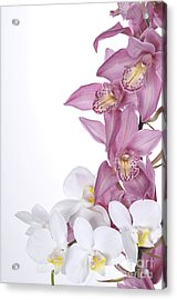 Beautiful Orchid Pink Acrylic Print by Boon Mee