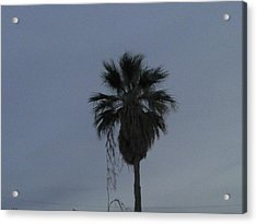 Beautiful Palm Tree Acrylic Print by Rebekah Luper