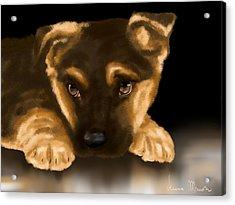 Beautiful Puppy Acrylic Print by Veronica Minozzi