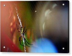 Beautiful Spider Acrylic Print by Adam LeCroy