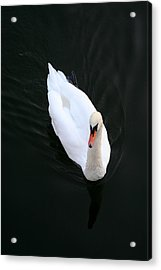 Beautiful Swan Acrylic Print by Allan Millora